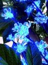 EUROPALMS LED Creangă inflorită cu 160 LED-uri , albastre, 1.2m