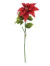 EUROPALMS Crăciuniță (Poinsettia), roșie, 1 fir, 70cm