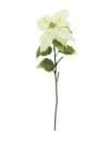EUROPALMS Crăciuniță (Poinsettia), crem, 1 fir, 70cm