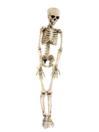 EUROPALMS Personaj de Halloween Schelet