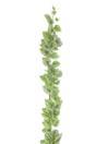EUROPALMS Viță de pepene galben, 180 cm