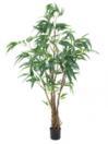 EUROPALMS Ficus Longifolia cu tulpina groasă, 180cm