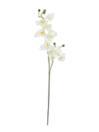 EUROPALMS Ramură de orhidee alb-crem, 100cm
