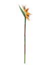 EUROPALMS Ramură de Sterliția, 95cm