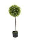 EUROPALMS Copac de cimșir sferic, 90cm