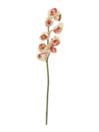 EUROPALMS Ramură de Cymbidium crem-roz, 90cm