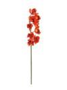 EUROPALMS Ramură de Cymbidium roșie, 90cm