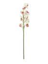 EUROPALMS Ramură de Cymbidium alb-roz, 90cm