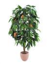 EUROPALMS Mango cu fructe, 165cm