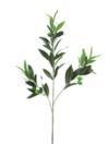 EUROPALMS Ramură de maslin cu 64 frunze si 6 masline