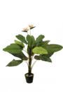 EUROPALMS Tralizia, 22 frunze, 230cm