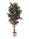 EUROPALMS Bougainvillea roz, 180cm