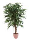 EUROPALMS Ficus cu frunza lungă, 150cm