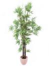 EUROPALMS Bambus cu trunchi negru, cu ghiveci, 210cm