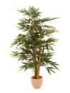 EUROPALMS Bambus cu trunchi perlat, natural, 150cm
