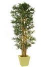 EUROPALMS Bambus cu mai multe trunchiuri, 300cm