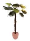 EUROPALMS Palmier palmat, 110cm