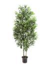 EUROPALMS Ficus argintiu cu frunză lungă, cu ghiveci, 160cm