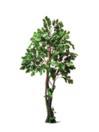EUROPALMS Stejar de pădure, 180 cm