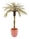 EUROPALMS Palmier auriu, 180cm