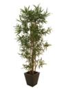 EUROPALMS Bambus cu mai multe trunchiuri, 180cm