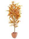 EUROPALMS Ficus portocaliu cu mai multe trunchiuri, 180cm
