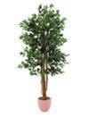 EUROPALMS Ficus, 180cm