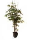 EUROPALMS Bambus cu trunchi negru, cu ghiveci, 240cm