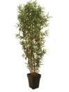 EUROPALMS Bambus cu mai multe trunchiuri, 240cm