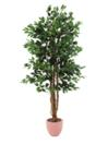 EUROPALMS Ficus, 210cm
