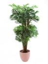 EUROPALMS Bambus imperial cu ghiveci,  210cm