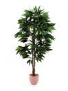 EUROPALMS Mango din junglă cu ghiveci, 180cm