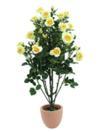 EUROPALMS Tufă de trandafiri galben deschis, cu ghiveci, 140cm