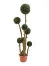 EUROPALMS Cimișir cu coroana din 6 sfere in ghiveci, 163cm
