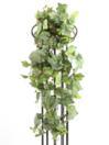 EUROPALMS Viță de vie verde, curgătoare 100cm