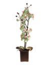 EUROPALMS Orhidee, culoarea mărului verde, 88cm