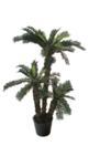 EUROPALMS Palmier Cycus cu 3 trunchiuri, 150cm