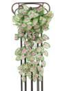 EUROPALMS Begonia curgătoare, densă, 60cm