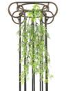 EUROPALMS Tufă de viță de bambus, 60cm