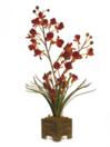 EUROPALMS Orhidee, culoarea caisei, 60cm