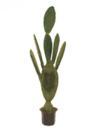 EUROPALMS Cactus Nopal in ghiveci, 130cm