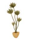 EUROPALMS Plantă suculentă, 160cm