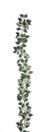 EUROPALMS Ghirlandă de Pothos, verde, 180cm