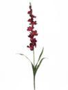EUROPALMS Gladiolă violet, 90cm