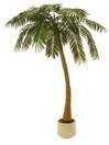 EUROPALMS Palmier cu 1 trunchi, 300cm