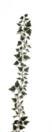 EUROPALMS Ghirlandă de iederă, verde-alb, 180cm