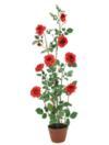 EUROPALMS Tufă de trandafiri roșii cu ghiveci, 140 cm