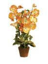 EUROPALMS Orhidee portocalie, 57cm
