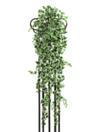 EUROPALMS Iederă curgătoare verde-alb,100cm