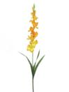 EUROPALMS Gladiolă portocalie, 90cm